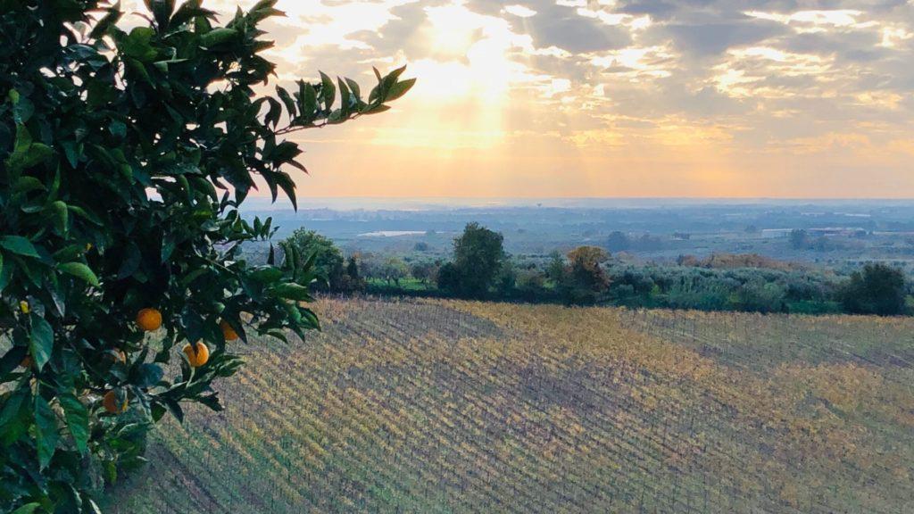 marco carpineti winery