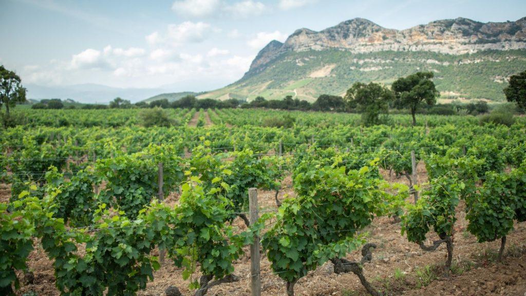 Yves-Leccia-Corsica-Wines