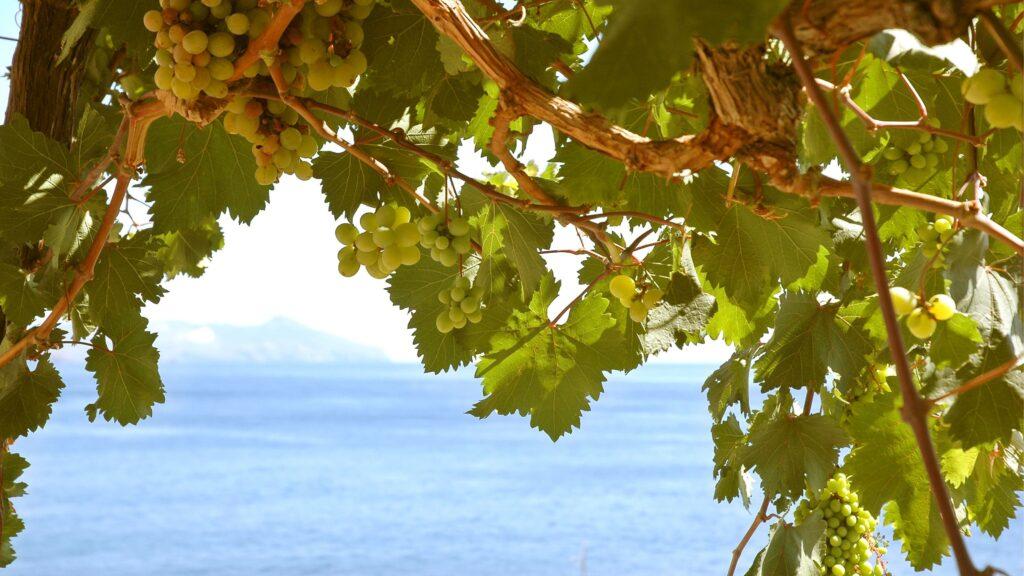 sicilian white wine
